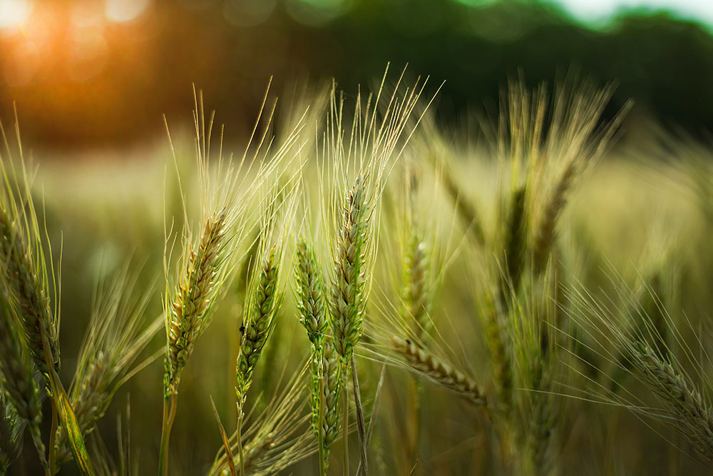 Agricultura romaneasca 03