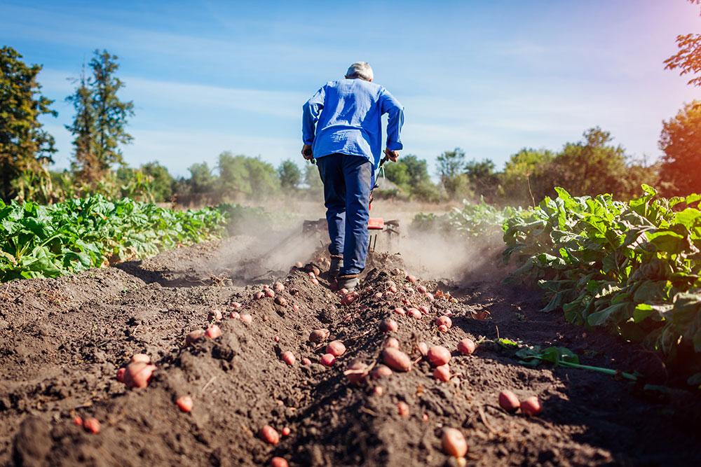 Agricultura romaneasca 04