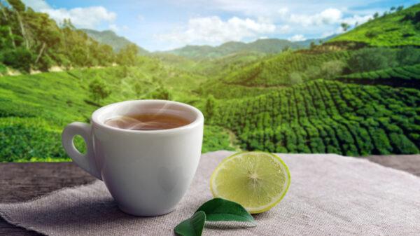 Totul despre ceaiul verde