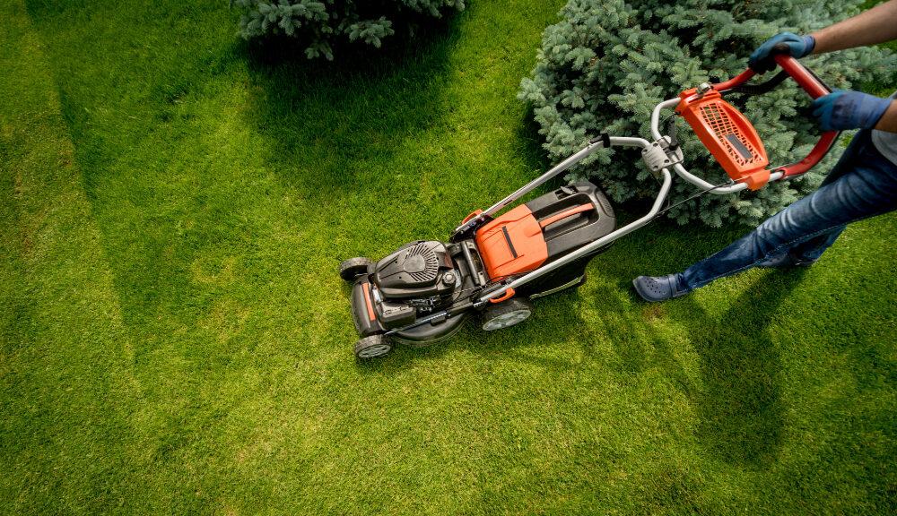 Importanta aerului si a umiditatii pentru plante